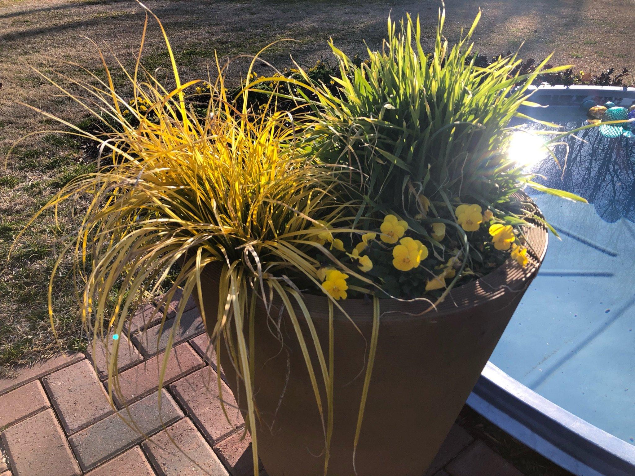 07 - Perennial - Carex
