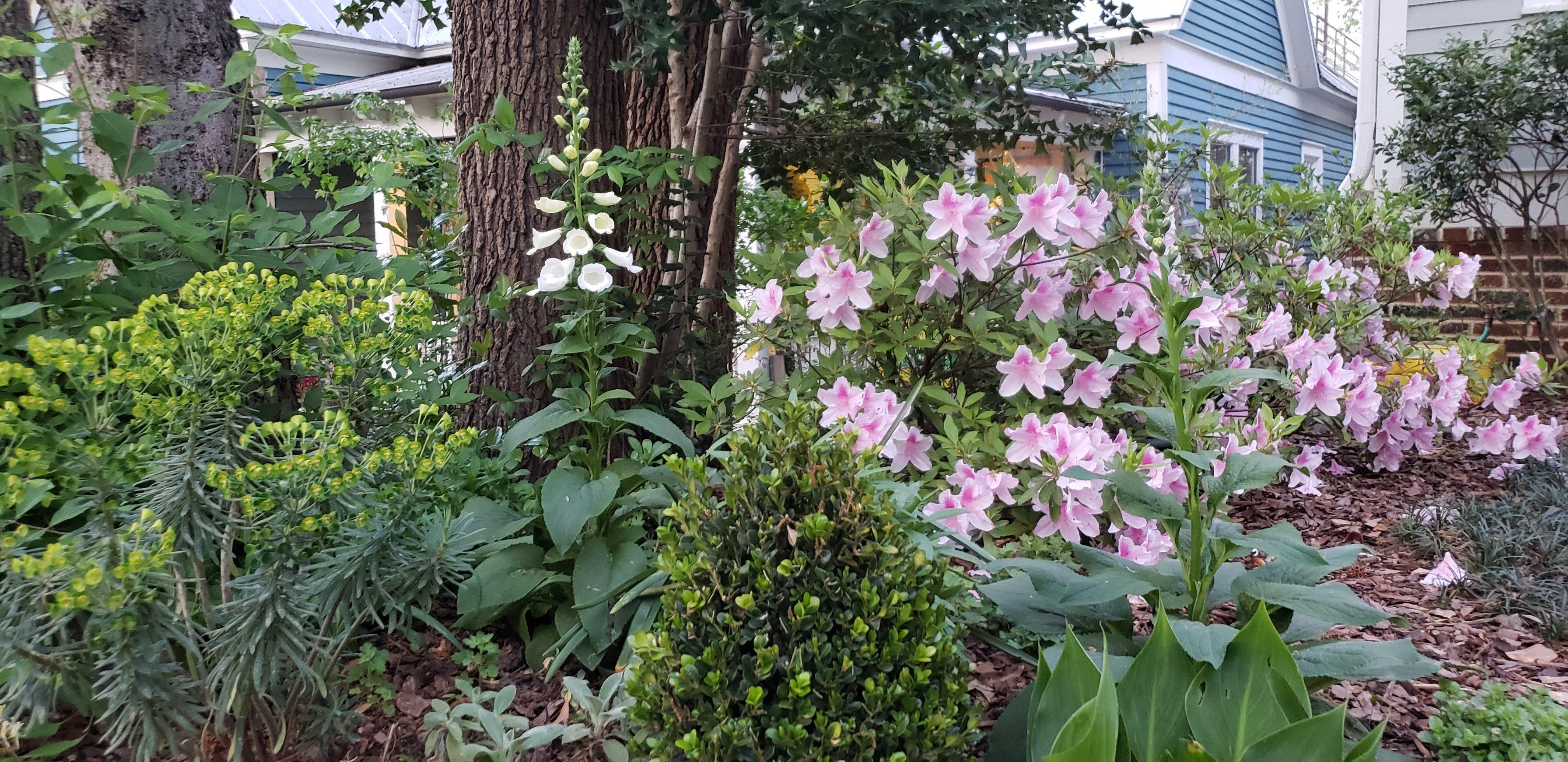 16 - spring flowers