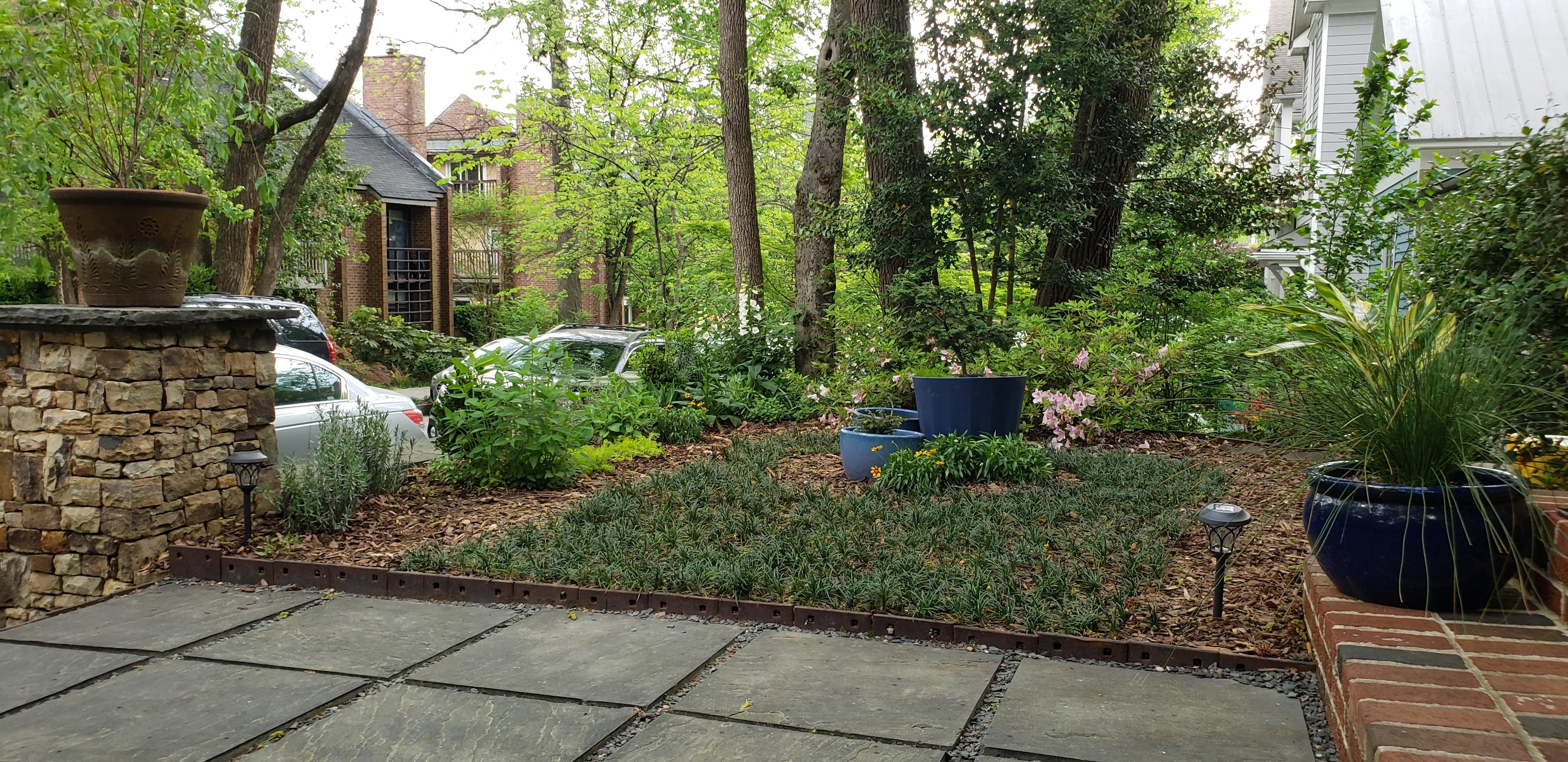 17 - spring perennials emerged