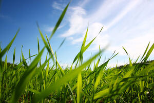 How to Tame Tall Grass - featured image