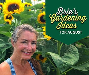 Brie's Gardening Ideas for August