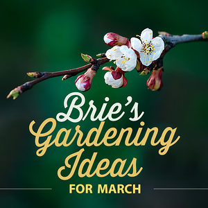Brie's Gardening Ideas for March