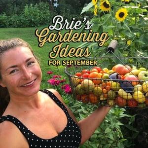 Brie's Gardening Ideas for September