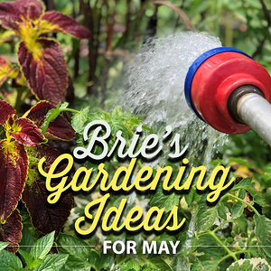 Brie's Gardening Ideas for May