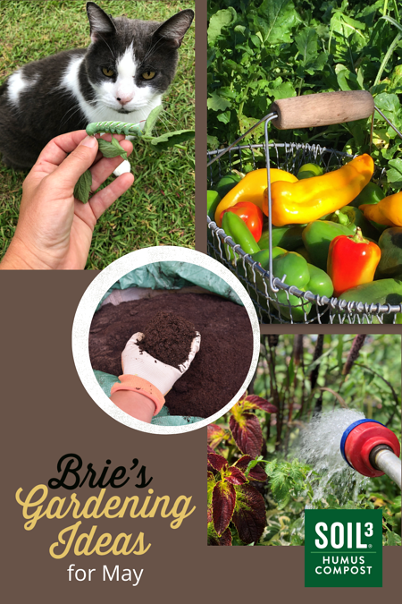 Bries Gardening Ideas For May