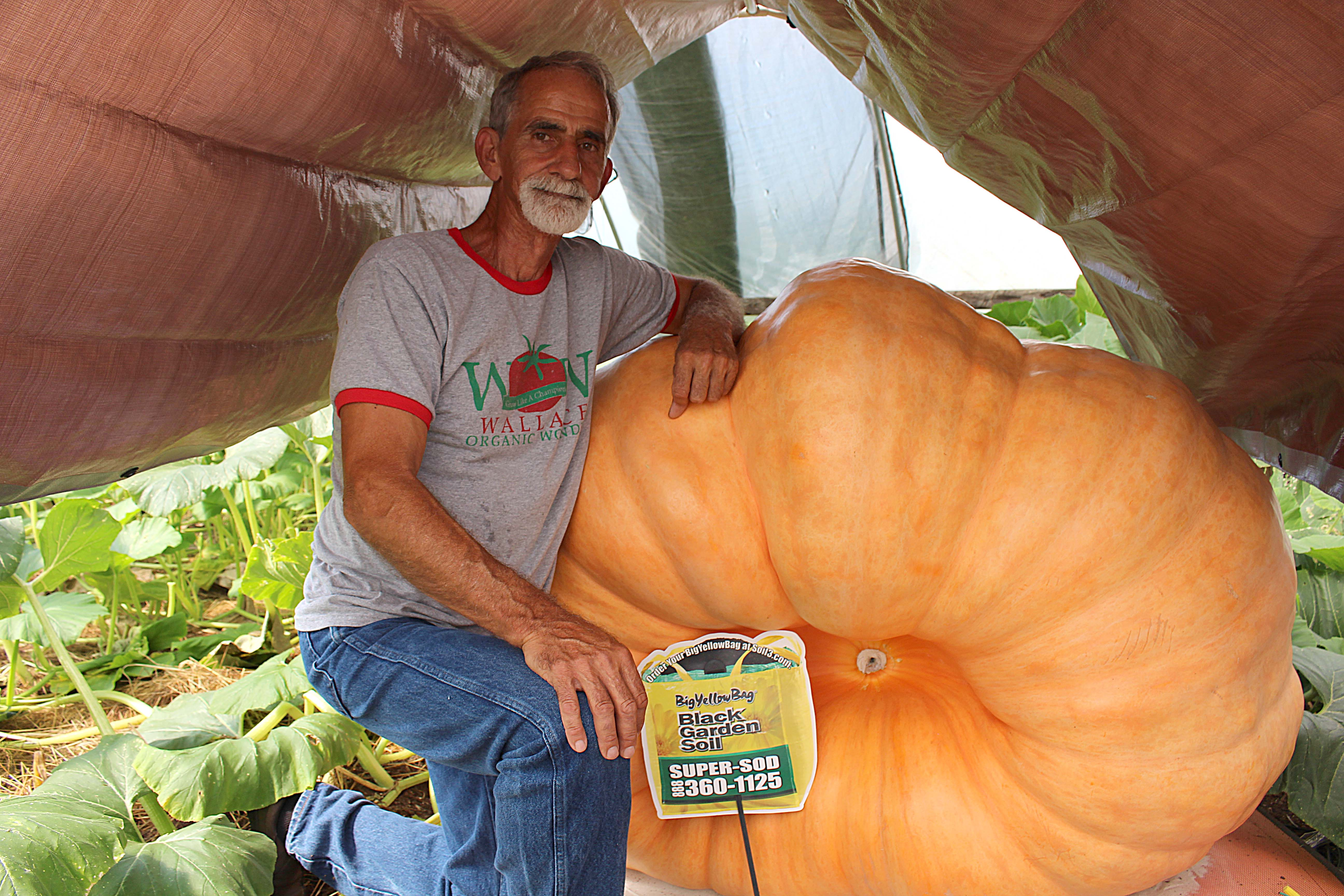Growing a Giant Pumpkin on a Scale with Danny Vester [Video] - featured image
