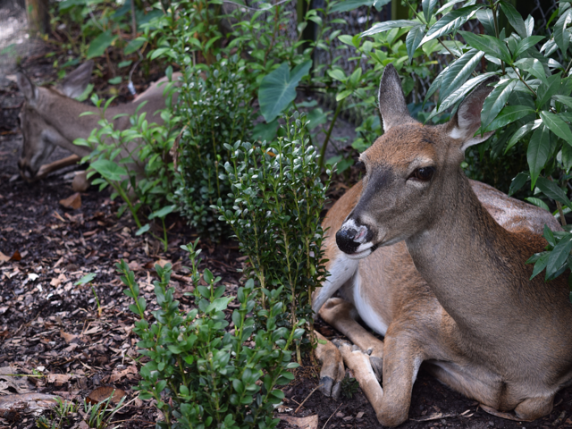Expert Gardener Tips for Keeping Deer Away - featured image