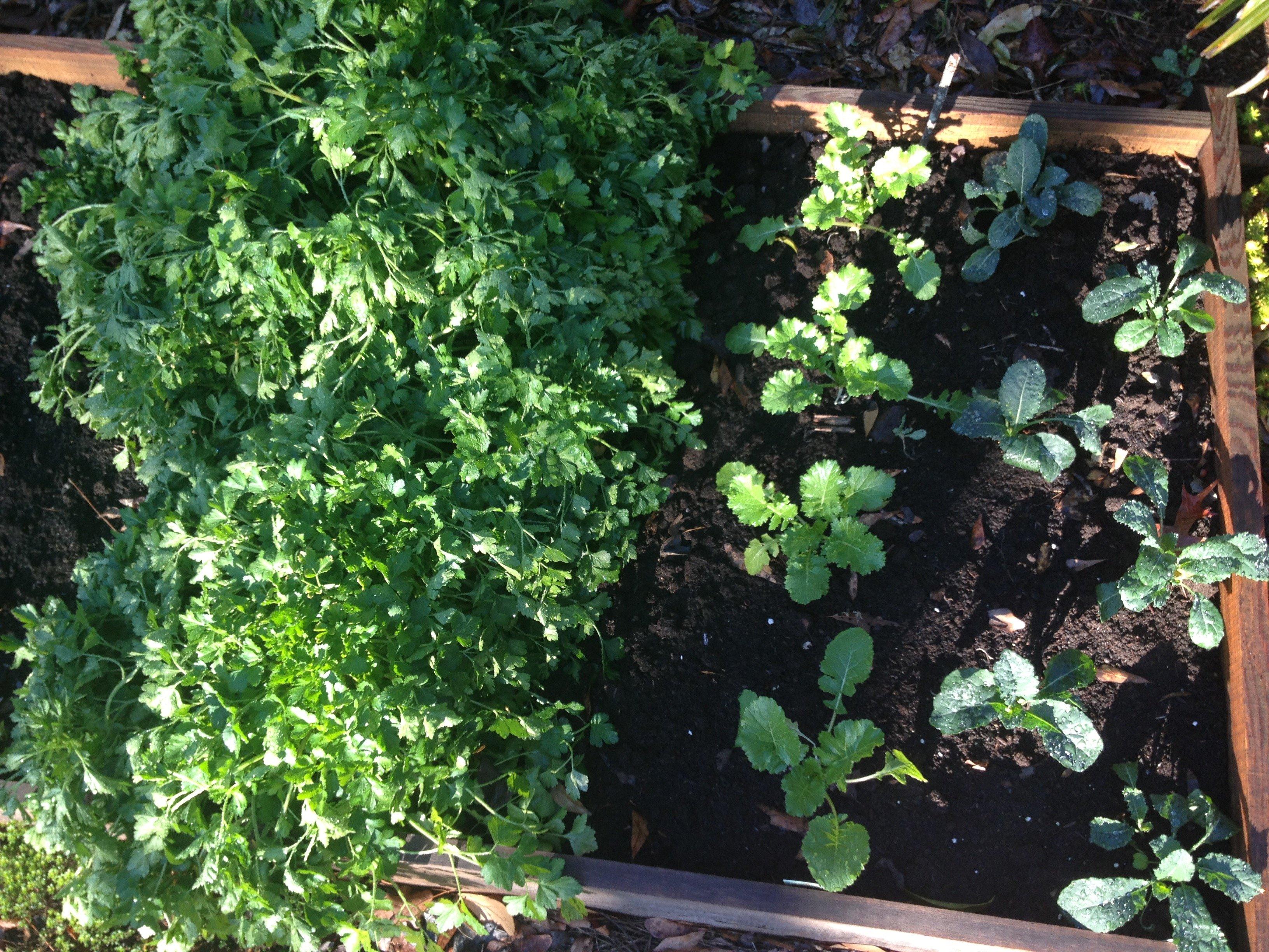 raised bed garden plantings