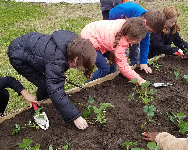 students planting strawberries in raised bed garden