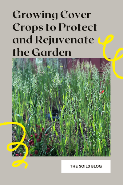 Growing Cover Crops to Protect and Rejuvenate the Garden