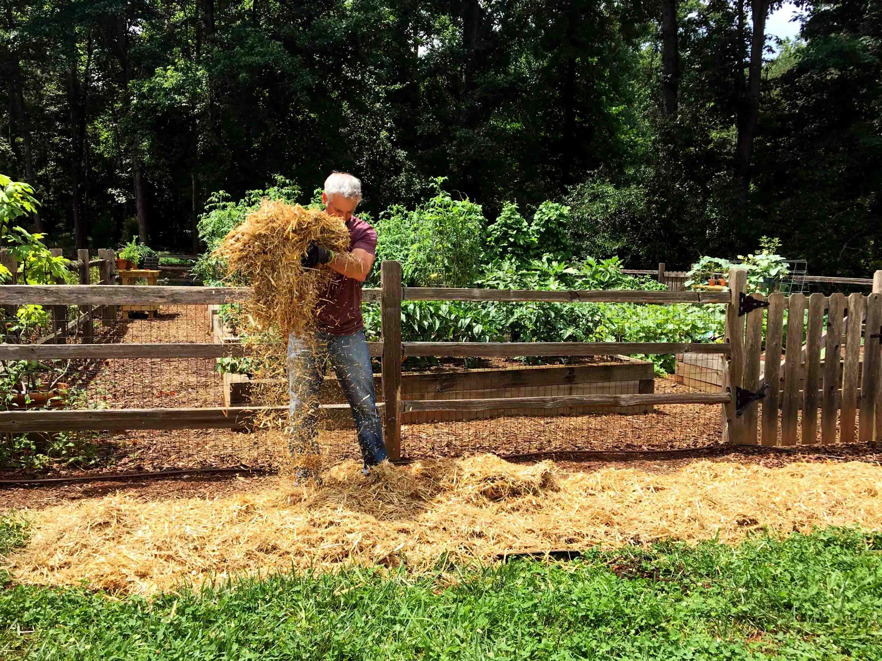 stray layer in no-till gardening