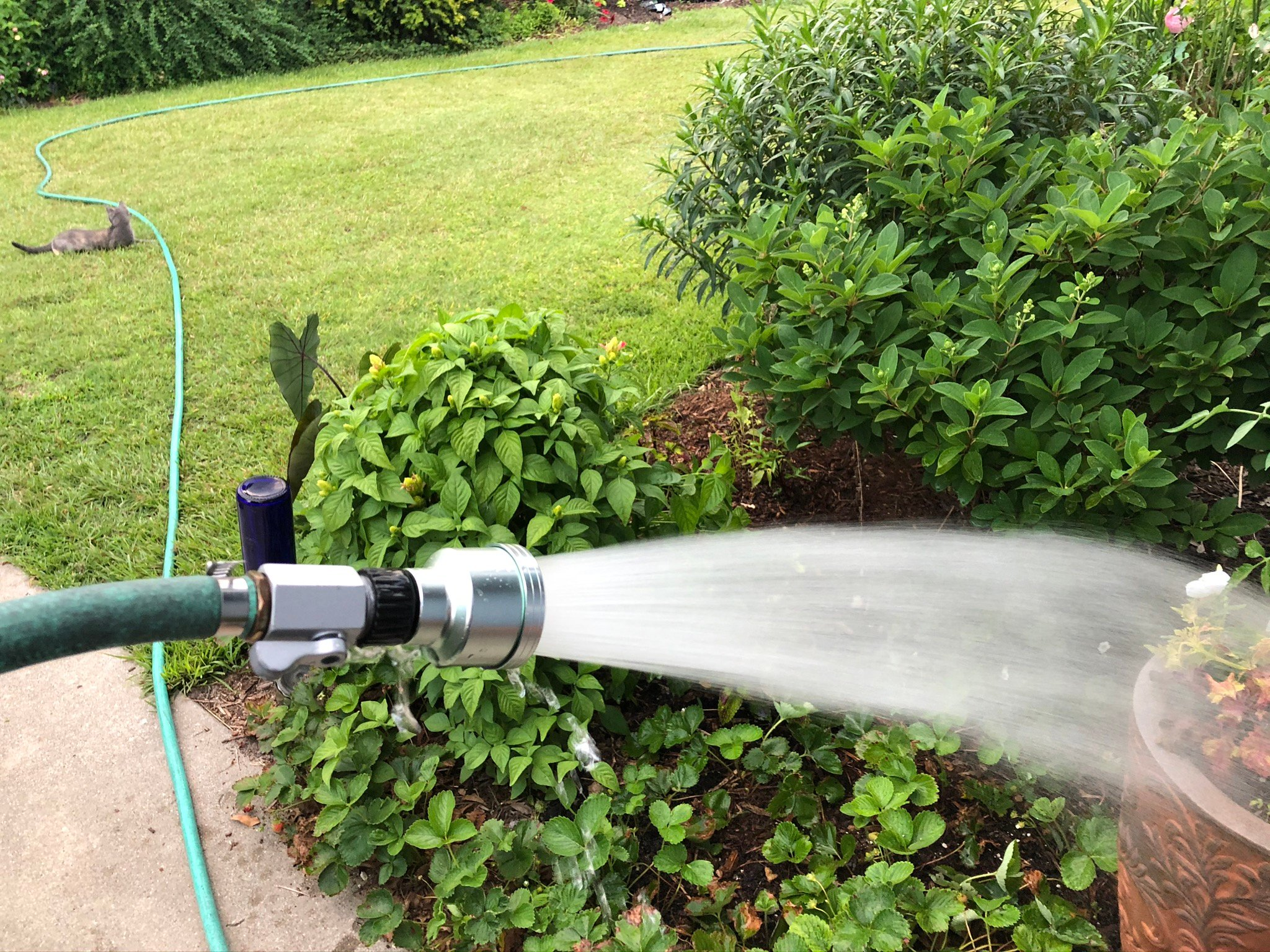 Hand watering container with rain wand
