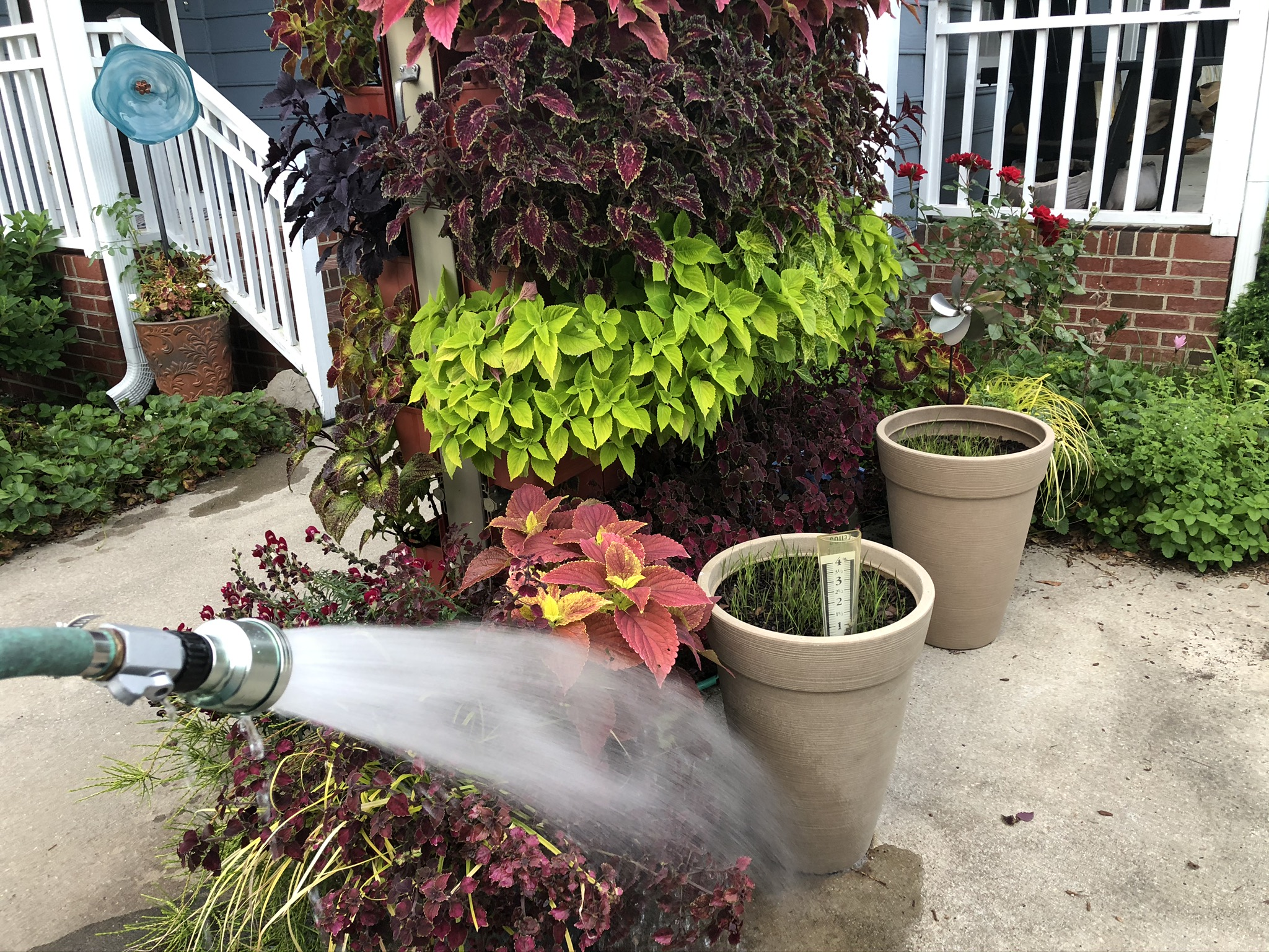 Living Wall planted with coleus