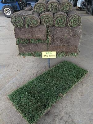 Individual Sod Rolls for Quick Fixes - featured image