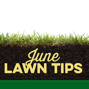 June Lawn Tips 2019 - featured image