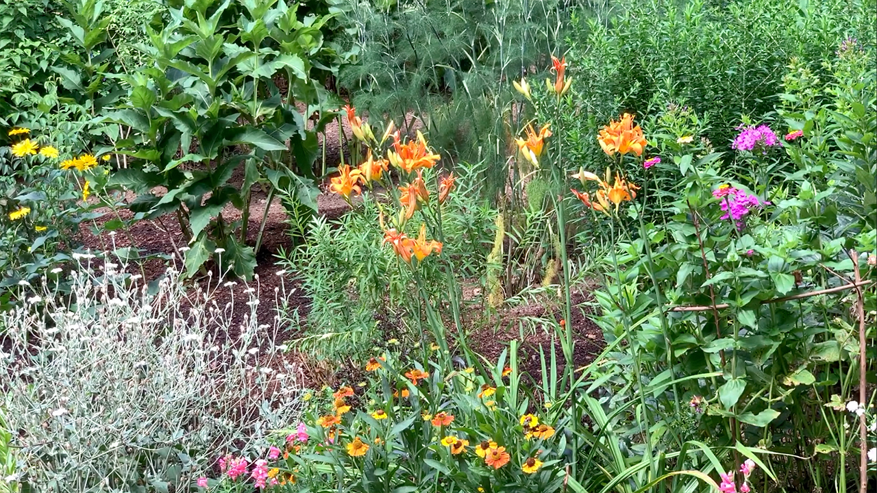 Perrenial flower bed amended with Soil3 attracts lots of pollinator