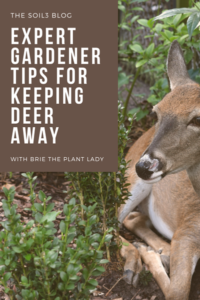 Keep Deer Away