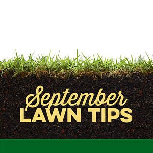 September Lawn Tips 2019 - featured image
