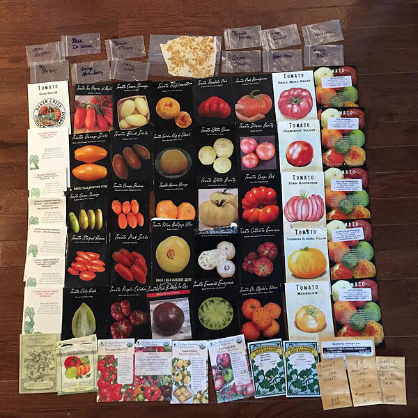 2016 tomato seed by Brie Arthur