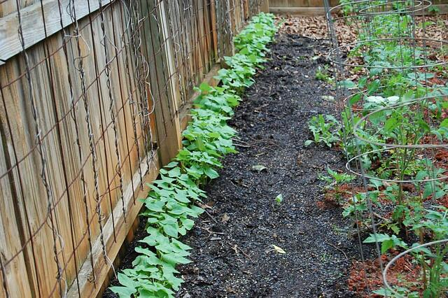 Gardening Stories from the Super-Sod Team - featured image