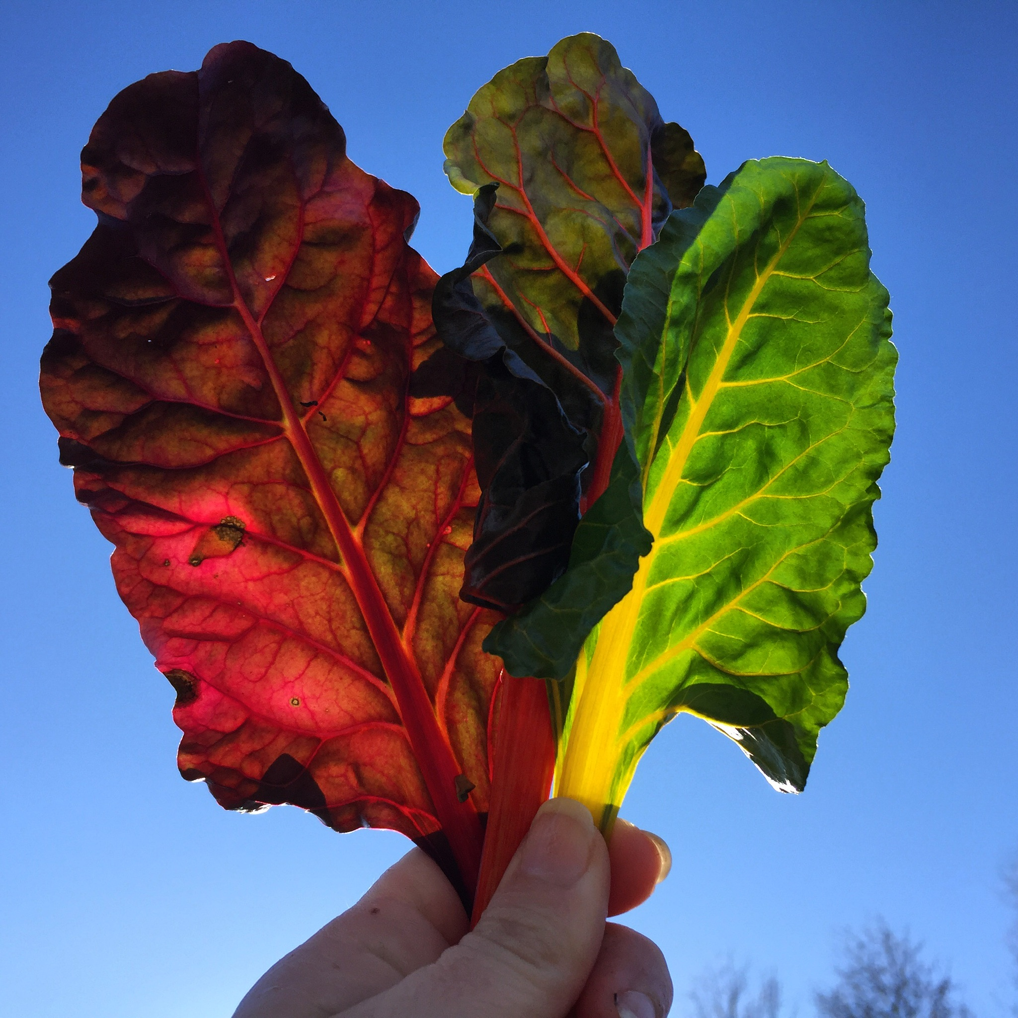 How to Start Cool Season Crops for Your Vegetable Garden - featured image