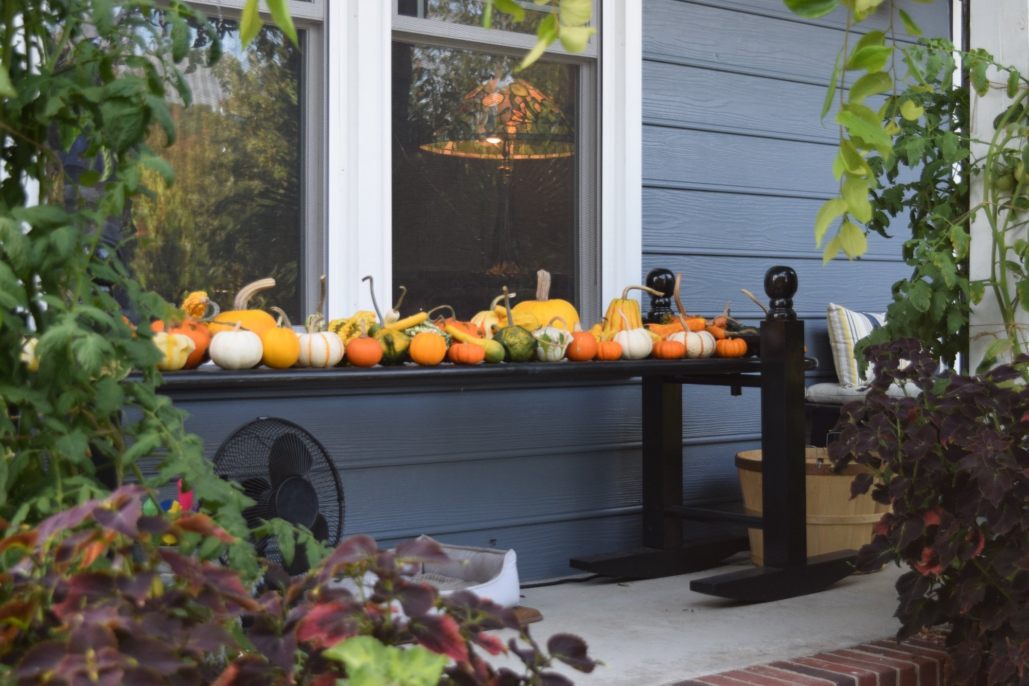 fall decorations from NC farmers market-1