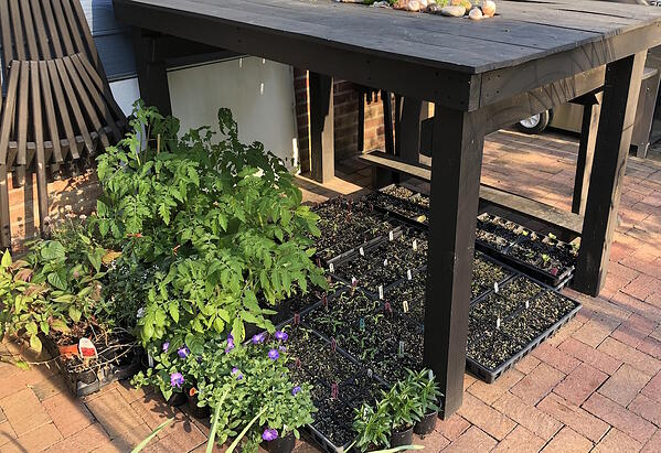 Brie's plants for spring containers and garden
