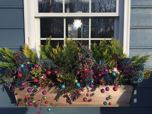 colorful holiday window box with conifers