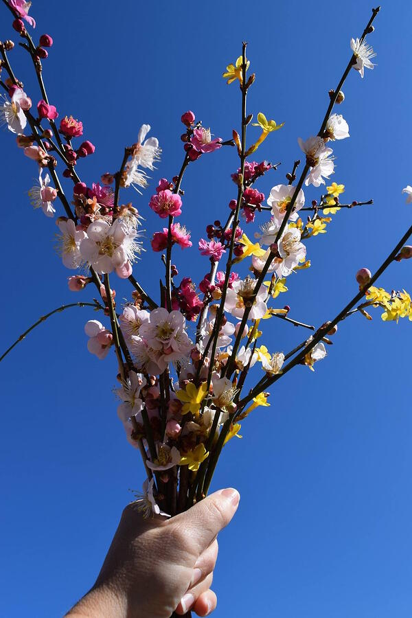 flowering apricot and _ bouquet