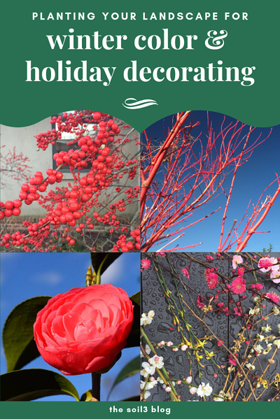 landscape winter color and holiday decorating
