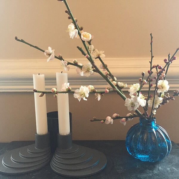 white flowering apricot decoration