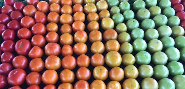 Heirloom Tomatoes APPEARANCE IMAGE