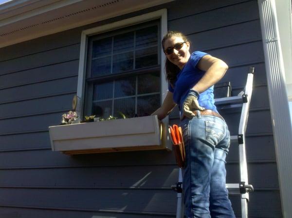 brie planting window box