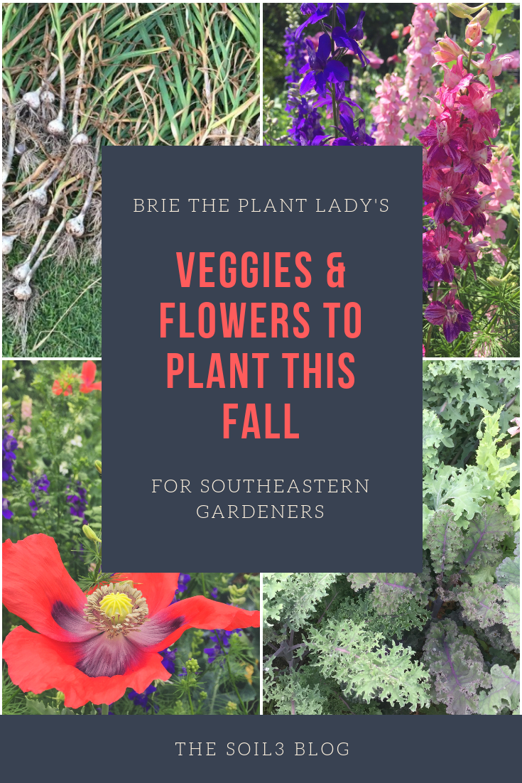 brie's cool season vegetables and flower seeds to plant in the fall