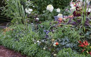 Foodscaping Simplified - How To Plant an Edible Bed Edge - featured image