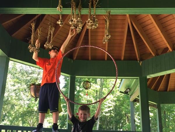 hanging garlic bulbs to dry