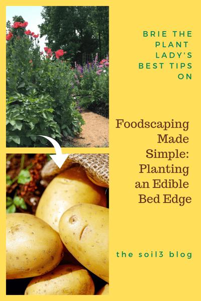 planting an edible bed edge (1)