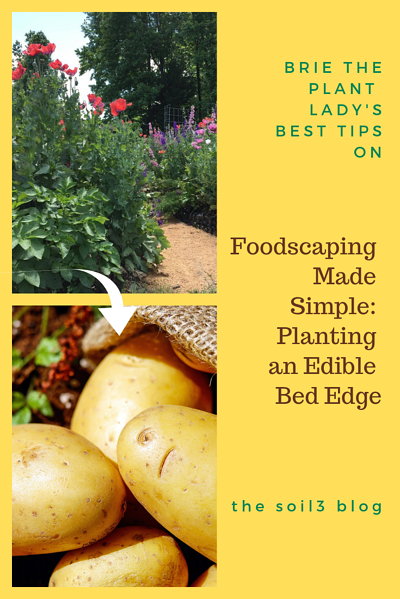 planting an edible bed edge (1)