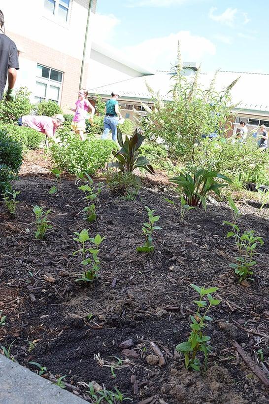 plants for rain garden