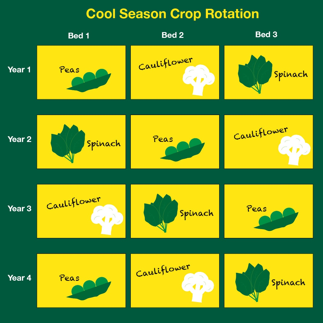 Fall Planting for Cool-Season Vegetables [Video] - featured image