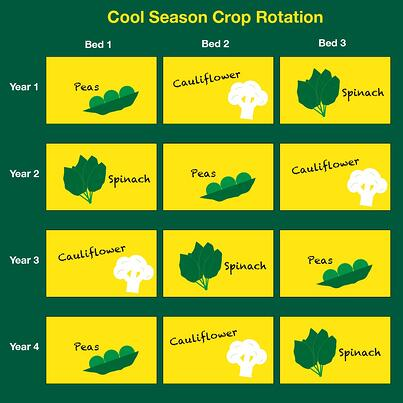 Cool season crop rotation 2.jpg