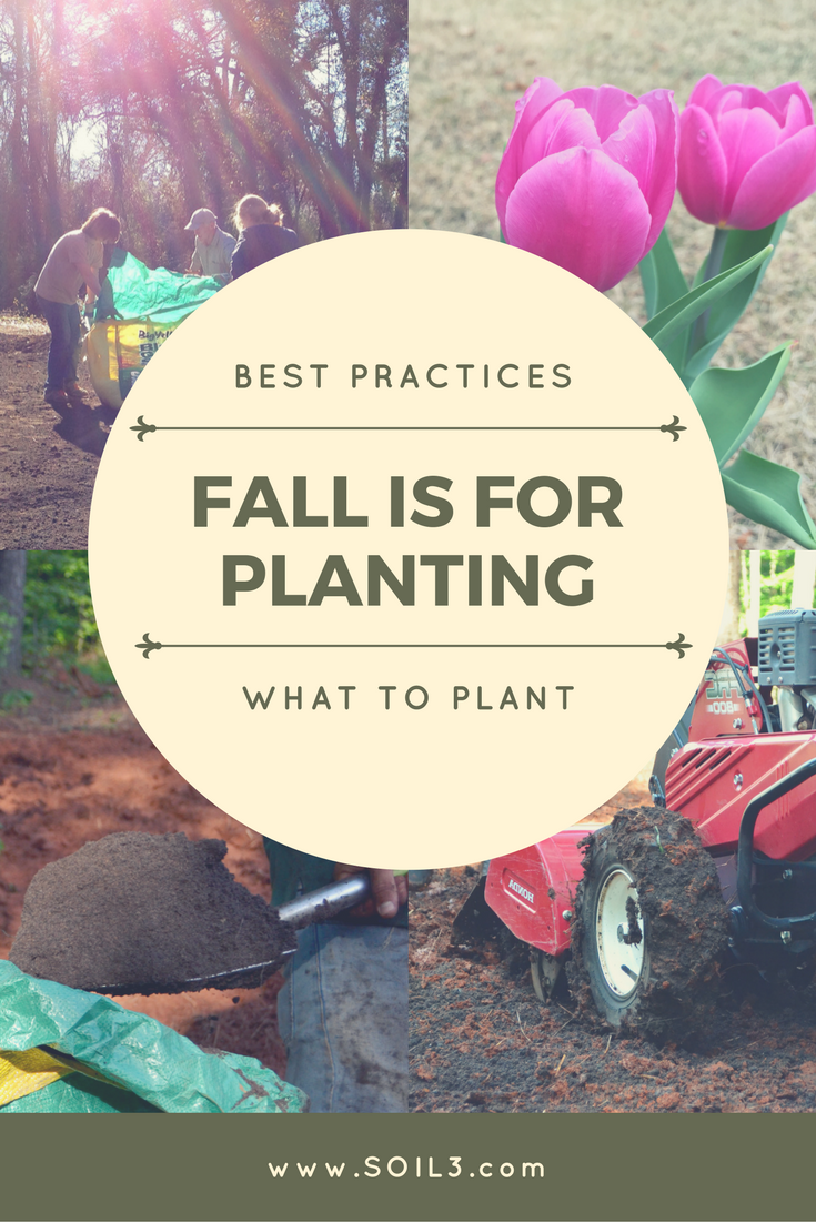Fall is for Planting.png
