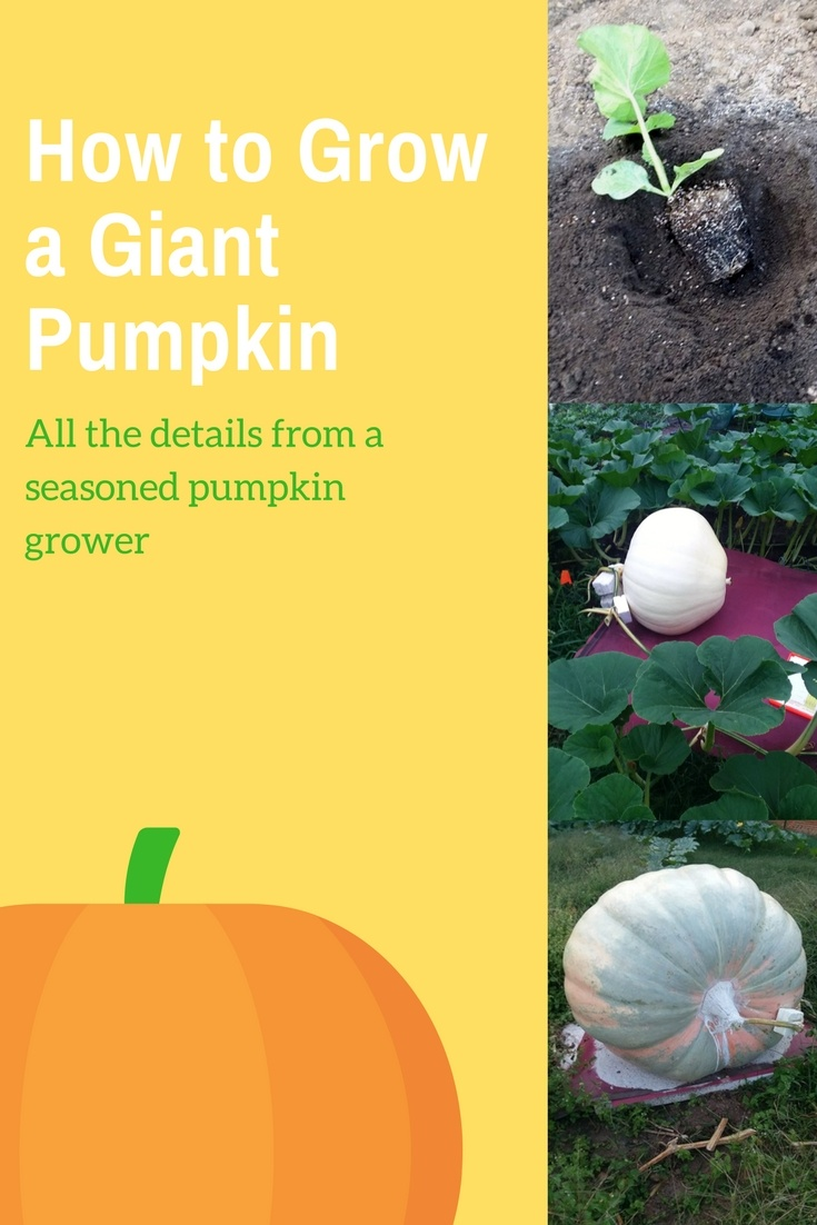 Growing Giant Pumpkins with Organic Compost.jpg