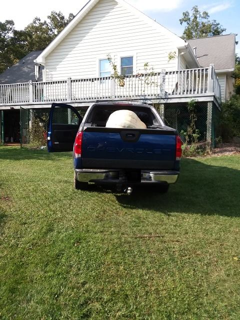 giant pumpkin loaded in a pickup on the way to festival.jpg