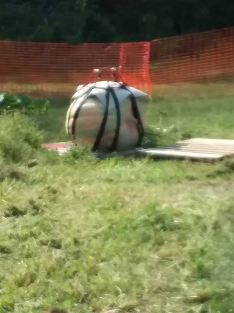 giant pumpkin loading with a harness.jpg