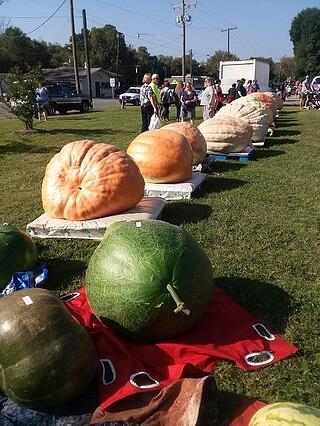 giant pumpkins from across the south come to weigh-off.jpg