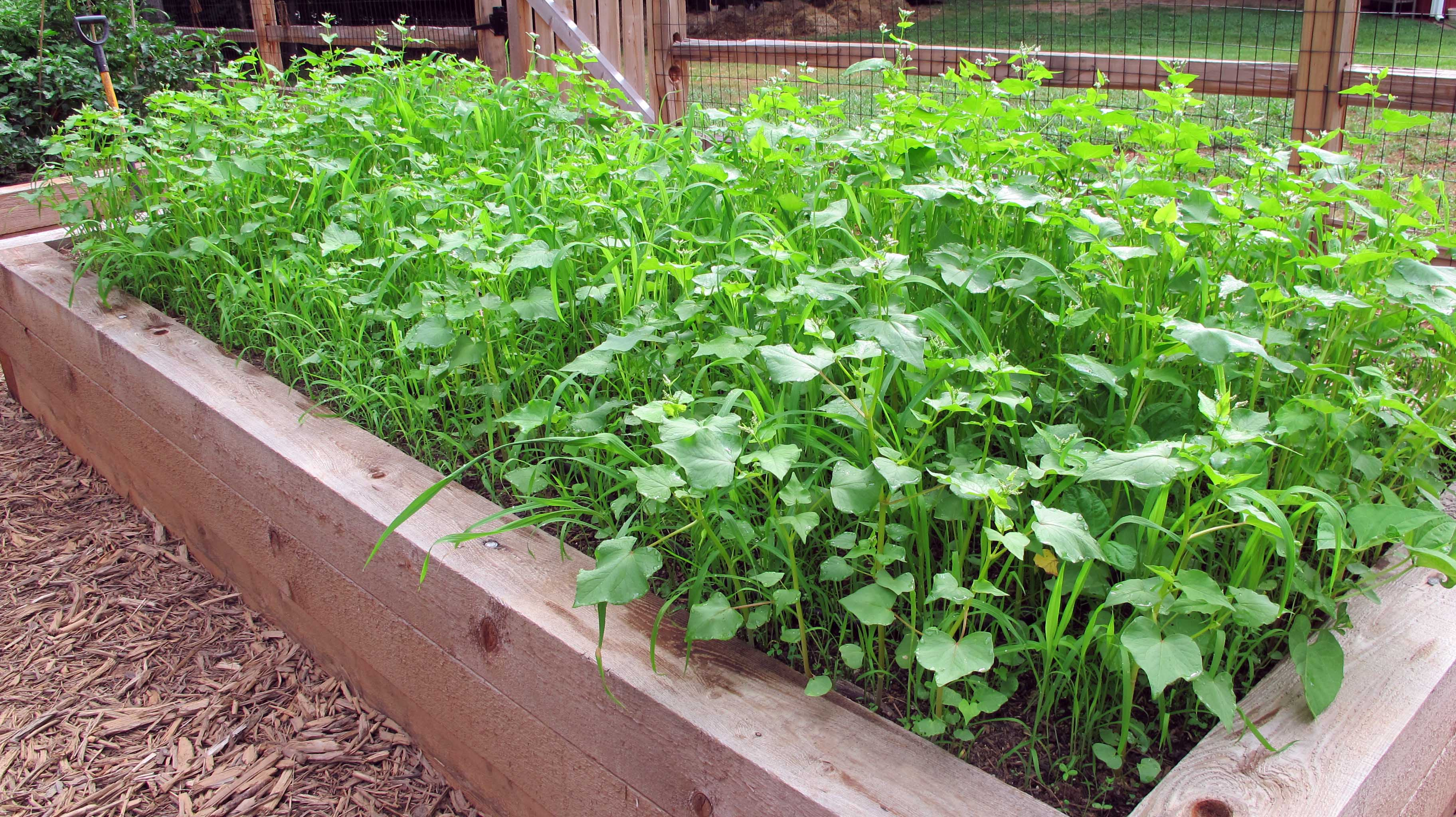 Cover Crops in Beds from Joe Lampl-2