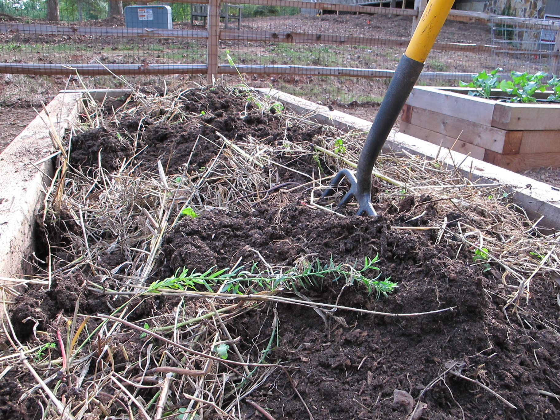 Cover Crops in Beds from Joe Lampl-4