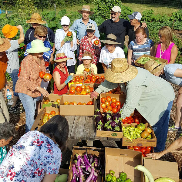 MGVCC master gardener plant a row for the hungry