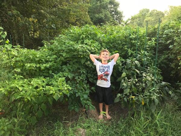 Soil3 hot pepper 08 28, 7 02 03 PM